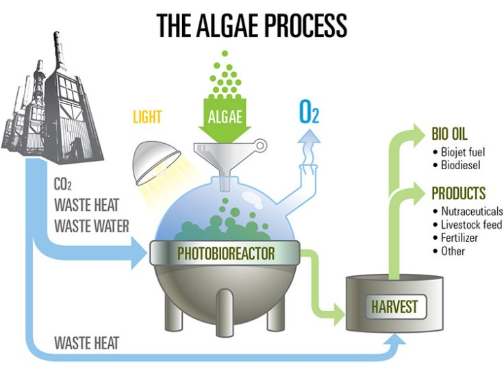 algae_process_diagram